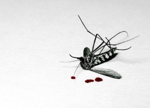 picture of a dead bug and blood